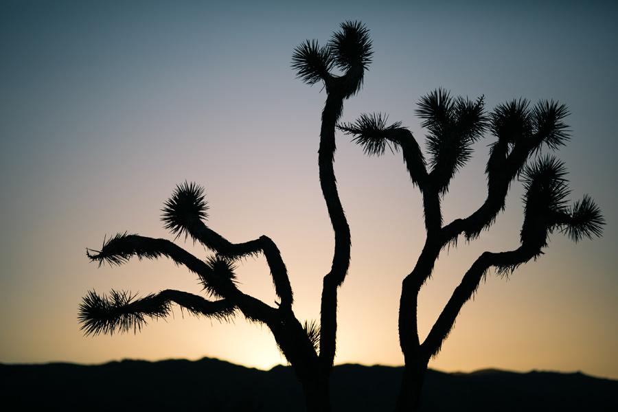 joshua tree photography