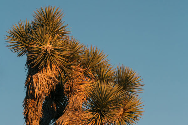 Joshua Tree Photographer | California Travel Photography
