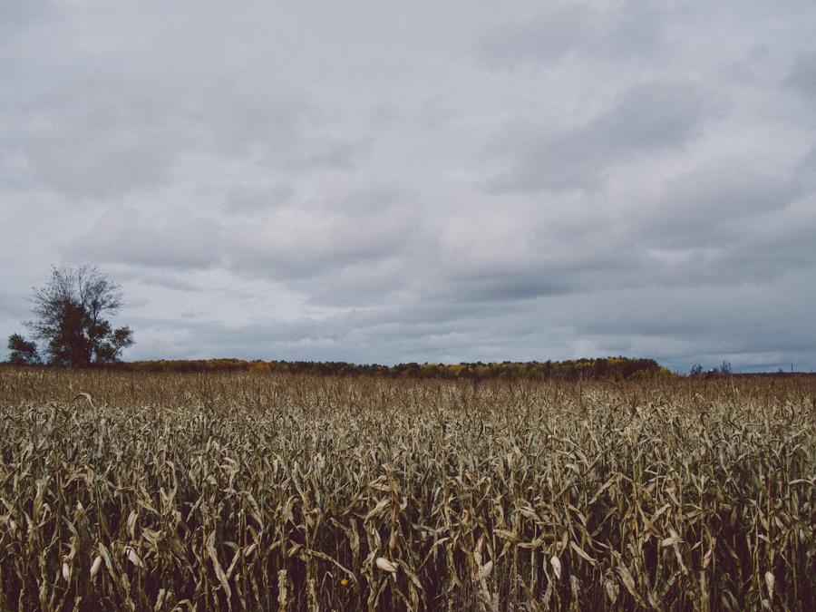 Corn farm in Wisconsin.