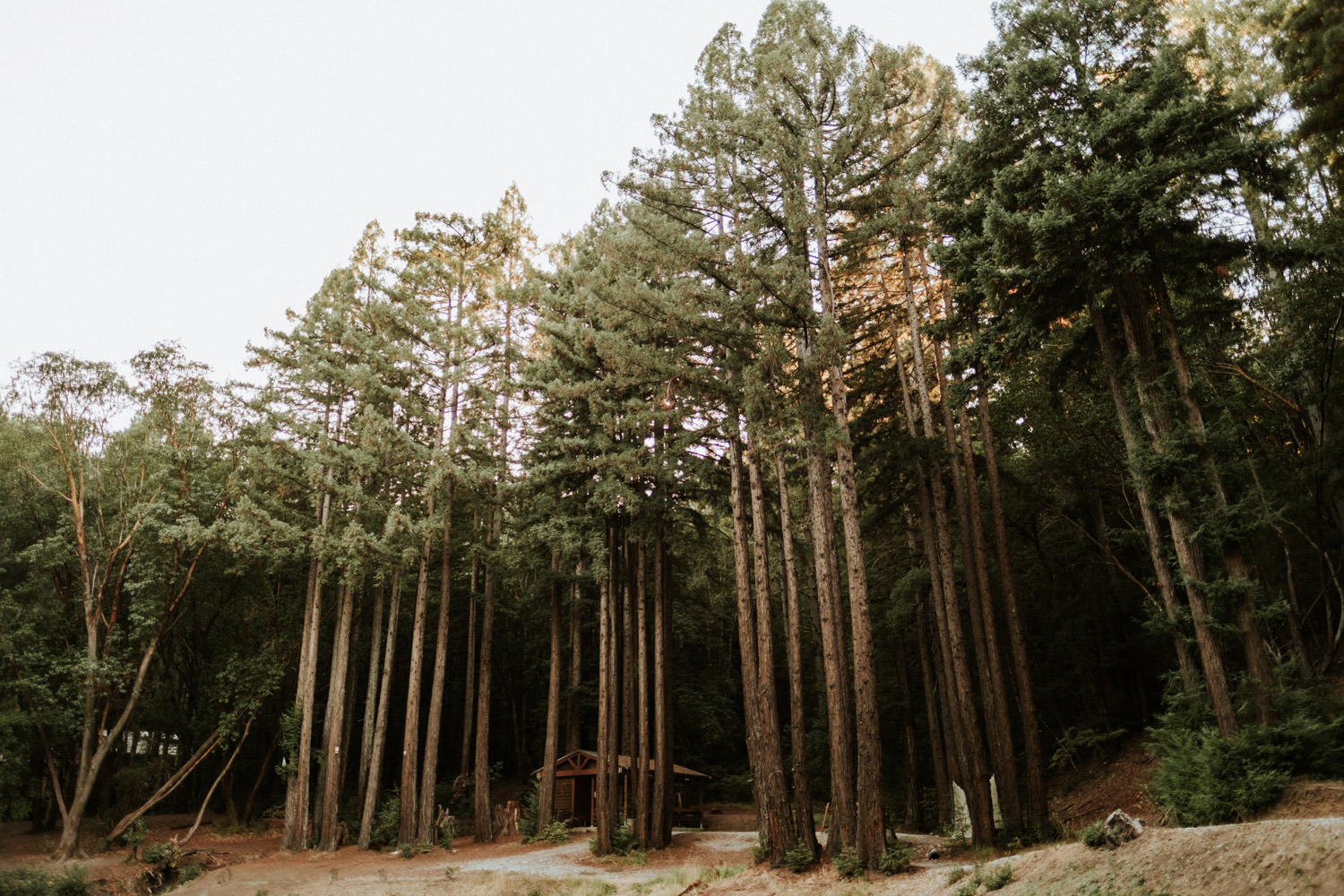 Redwoods in the back of YMCA Camp Campbell