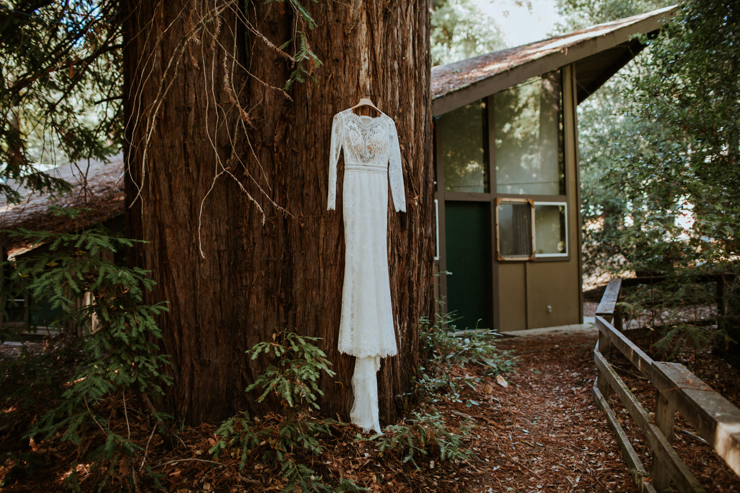 Pictures of the wedding dress hanging on the redwood in YMCA Camp campbell in California