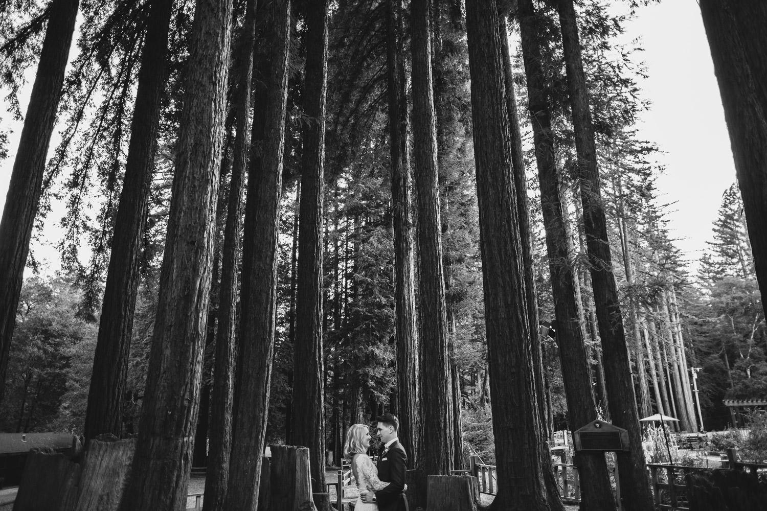 Bride and groom kiss at redwood in California